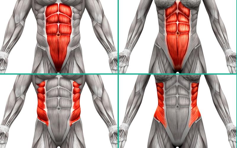 Anatomie der Bauchmuskulatur bei Männern und Frauen.